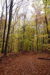 Herbstlicher Waldweg Gambach, MSP